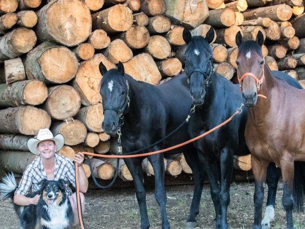Classic-Western-Pferde-rechts